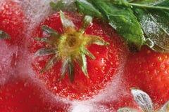 Παγωμένες φράουλες σε έναν φραγμό του πάγου Στοκ Εικόνες