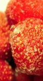 παγωμένες φράουλες Στοκ Φωτογραφίες