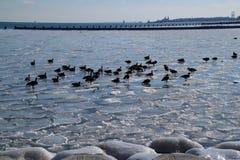 Παγωμένη λίμνη Μίτσιγκαν με τους παγωμένους βράχους και gees και την άποψη του ορίζοντα του Σικάγου Στοκ φωτογραφία με δικαίωμα ελεύθερης χρήσης