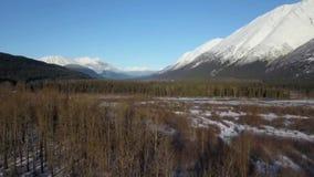 Παγωμένη από την Αλάσκα αγριότητα απόθεμα βίντεο