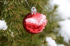 Παγωμένη διακόσμηση Χριστουγέννων Στοκ Εικόνα