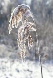 Παγωμένη λεπίδα της χλόης Στοκ φωτογραφία με δικαίωμα ελεύθερης χρήσης