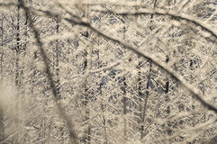 Παγωμένη ηλιόλουστη ημέρα θάμνων Στοκ φωτογραφία με δικαίωμα ελεύθερης χρήσης