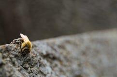 Παγωμένη μέλισσα στοκ εικόνα με δικαίωμα ελεύθερης χρήσης