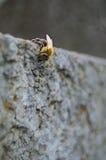 Παγωμένη μέλισσα στοκ φωτογραφία