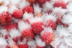 Παγωμένη μακρο άποψη άγριων φραουλών Στοκ Φωτογραφία
