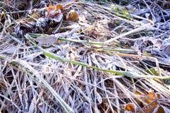 Παγωμένη πτώση χιονιού πάγου φύλλο Στοκ φωτογραφίες με δικαίωμα ελεύθερης χρήσης