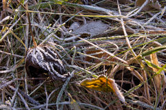 Παγωμένη πτώση χιονιού πάγου φύλλο Στοκ Εικόνα