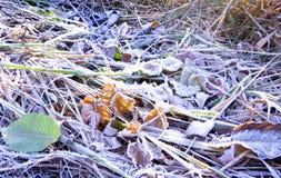 Παγωμένη πτώση χιονιού πάγου φύλλο Στοκ εικόνες με δικαίωμα ελεύθερης χρήσης