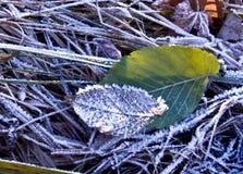 Παγωμένη πτώση χιονιού πάγου φύλλο Στοκ εικόνα με δικαίωμα ελεύθερης χρήσης
