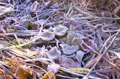 Παγωμένη πτώση χιονιού πάγου φύλλο Στοκ Εικόνες