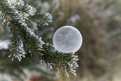Παγωμένη φυσαλίδα σαπουνιών στο χριστουγεννιάτικο δέντρο στοκ φωτογραφία με δικαίωμα ελεύθερης χρήσης