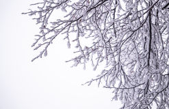 Παγωμένη χειμερινή κάρτα Χιονώδης Στοκ φωτογραφία με δικαίωμα ελεύθερης χρήσης