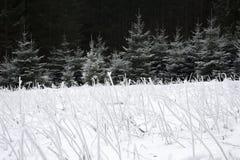 Παγωμένη χλόη στο χιονισμένο πεδίο Στοκ Φωτογραφίες
