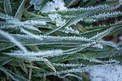 Παγωμένη χλόη στενό σε επάνω Στοκ Εικόνα