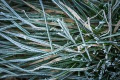 Παγωμένη χλόη στενό σε επάνω Στοκ Εικόνες