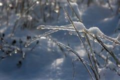 Παγωμένη χλόη Στοκ εικόνες με δικαίωμα ελεύθερης χρήσης