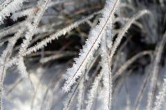 παγωμένη χλόη Στοκ φωτογραφία με δικαίωμα ελεύθερης χρήσης