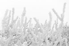 Παγωμένοι άσπροι κλάδοι Στοκ φωτογραφίες με δικαίωμα ελεύθερης χρήσης