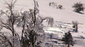 Παγωμένοι θάμνοι στο χειμερινό δάσος απόθεμα βίντεο