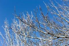 Παγωμένοι κλάδοι δέντρων στο κλίμα ουρανού στοκ φωτογραφίες με δικαίωμα ελεύθερης χρήσης