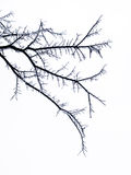 Παγωμένοι κλάδοι δέντρων Στοκ φωτογραφία με δικαίωμα ελεύθερης χρήσης