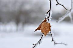 Παγωμένοι κλάδοι του δέντρου το χειμώνα Στοκ εικόνα με δικαίωμα ελεύθερης χρήσης