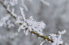 Παγωμένοι κλάδοι του δέντρου το χειμώνα Στοκ φωτογραφίες με δικαίωμα ελεύθερης χρήσης