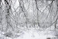 Παγωμένοι κλάδοι των δέντρων στο δάσος Στοκ εικόνες με δικαίωμα ελεύθερης χρήσης