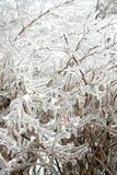 Παγωμένοι κλαδίσκοι Forzen Στοκ φωτογραφία με δικαίωμα ελεύθερης χρήσης