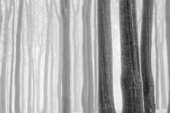 Παγωμένοι κορμοί Στοκ φωτογραφία με δικαίωμα ελεύθερης χρήσης