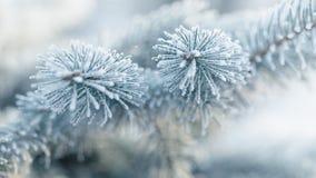 Παγωμένοι κλαδίσκοι έλατου το χειμώνα που καλύπτεται με την πάχνη Στοκ Εικόνα
