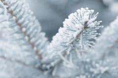 Παγωμένοι κλαδίσκοι έλατου το χειμώνα που καλύπτεται με την πάχνη Στοκ εικόνες με δικαίωμα ελεύθερης χρήσης