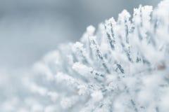 Παγωμένοι κλαδίσκοι έλατου το χειμώνα που καλύπτεται με την πάχνη Στοκ Φωτογραφία