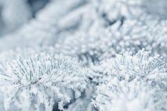 Παγωμένοι κλαδίσκοι έλατου το χειμώνα που καλύπτεται με την πάχνη Στοκ Εικόνες