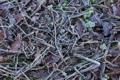 Παγωμένοι κλαδίσκοι και φύλλα σε ένα κρύο πρωί Στοκ εικόνα με δικαίωμα ελεύθερης χρήσης