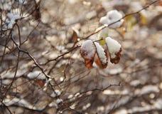 παγωμένοι κλαδίσκοι Στοκ φωτογραφία με δικαίωμα ελεύθερης χρήσης