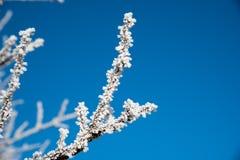 παγωμένοι κλαδίσκοι Στοκ εικόνες με δικαίωμα ελεύθερης χρήσης