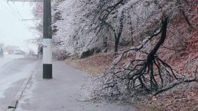 Παγωμένοι πεσμένοι θάμνοι στην άκρη του δρόμου απόθεμα βίντεο