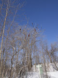 Παγωμένοι ποταμός και δέντρα το χειμώνα σε ένα πάρκο στοκ εικόνα με δικαίωμα ελεύθερης χρήσης