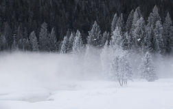 Παγωμένοι χειμερινοί δασικοί ομίχλη και τομέας Στοκ Φωτογραφία
