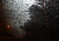 Παγωμένος ανεμοφράκτης σε μια χειμερινή νύχτα Στοκ εικόνα με δικαίωμα ελεύθερης χρήσης