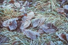 παγωμένος βγάζει φύλλα Στοκ εικόνες με δικαίωμα ελεύθερης χρήσης