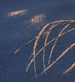 Παγωμένος κάλαμος, έννοια χειμερινής εποχής Στοκ φωτογραφία με δικαίωμα ελεύθερης χρήσης
