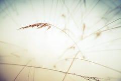 Παγωμένος κάλαμος με τις ζωηρόχρωμες σκιές Στοκ φωτογραφία με δικαίωμα ελεύθερης χρήσης
