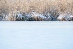 Παγωμένος κάλαμος που καλύπτεται με τον πάγο στην άκρη της λίμνης Στοκ Φωτογραφία