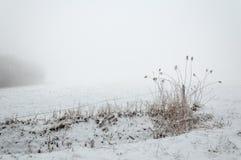 Παγωμένος κάλαμος σε ένα χειμερινό τοπίο Στοκ εικόνα με δικαίωμα ελεύθερης χρήσης