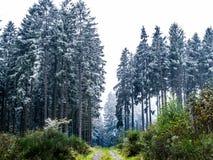 Παγωμένος καιρός στο γερμανικό ψηλό κομψό δάσος στοκ φωτογραφία με δικαίωμα ελεύθερης χρήσης