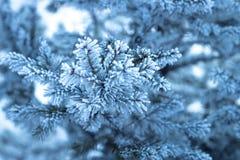 Παγωμένος κλάδος του δέντρου έλατου Στοκ Εικόνες