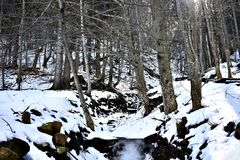 Παγωμένος κολπίσκος στο δάσος Στοκ εικόνα με δικαίωμα ελεύθερης χρήσης